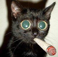 [Image: cat_smoking.jpg]