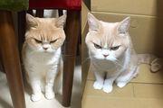 【地球人本大王很不爽】紅爆網絡 - 怒啤貓
