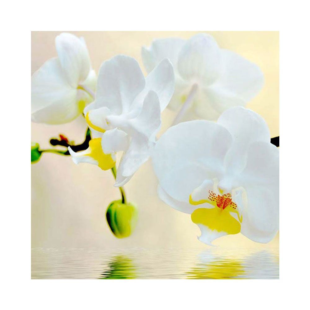 Needlework Diy 5D Diamond Painting Flowers White Orchid Cross-Stitch Pictures Of Mosaic Dimond Crafts For Bedroom Decor
