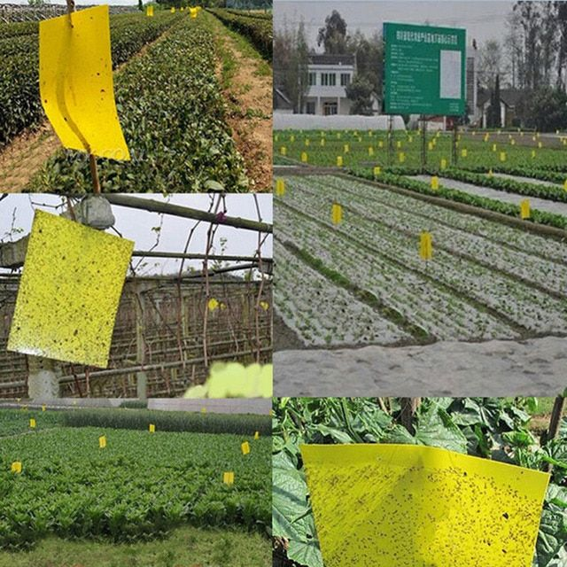 25x15cm Double sided Sticky Flying Insects Thrips Gnats Aphid Fruitfly Trap Yellow