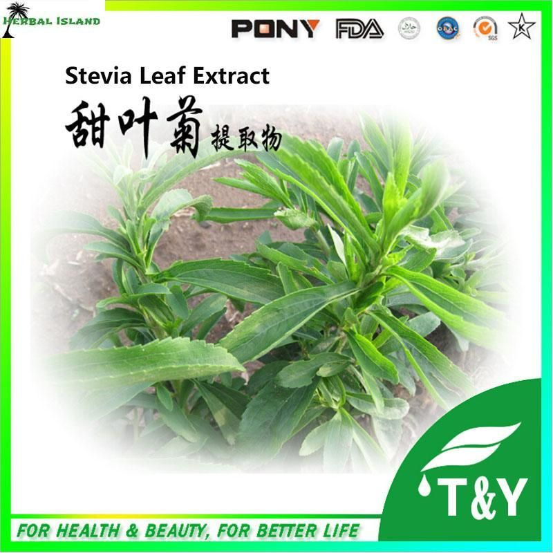 100% High Quality stevia rebaudiana/ Natural Stevia Extract 300g for free shipping