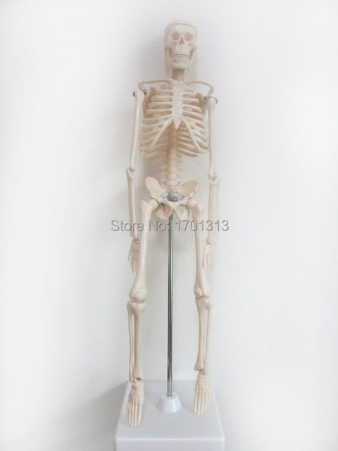 45cm human skeleton model Special medical decoration Family personalized Halloween decorative Figurines scheletro umano