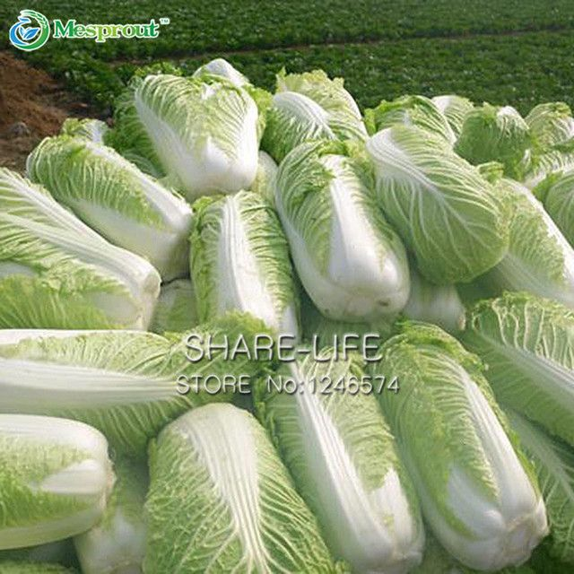 100PCS Chinese  Delicious Cabbage Seeds Easy to Grow Nutritious Green Vegetable Seeds Brassica Pekinensis Plants Garden Supplies