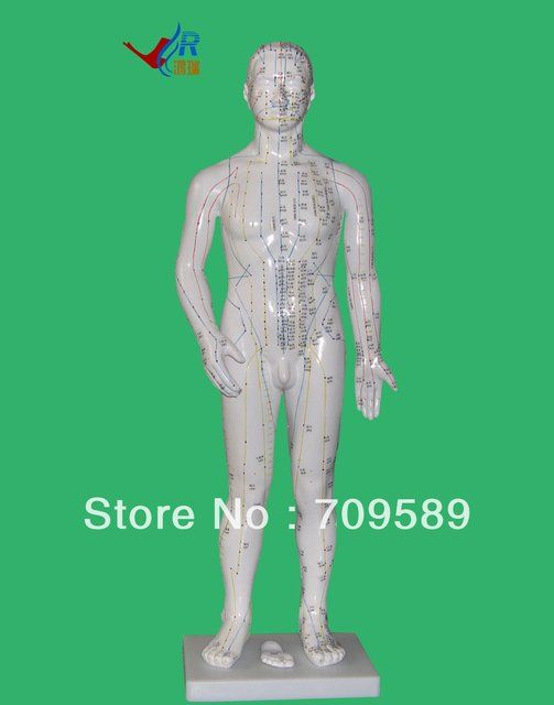 Model Anatomy Professional Medical Acupuncture  Model 70cm