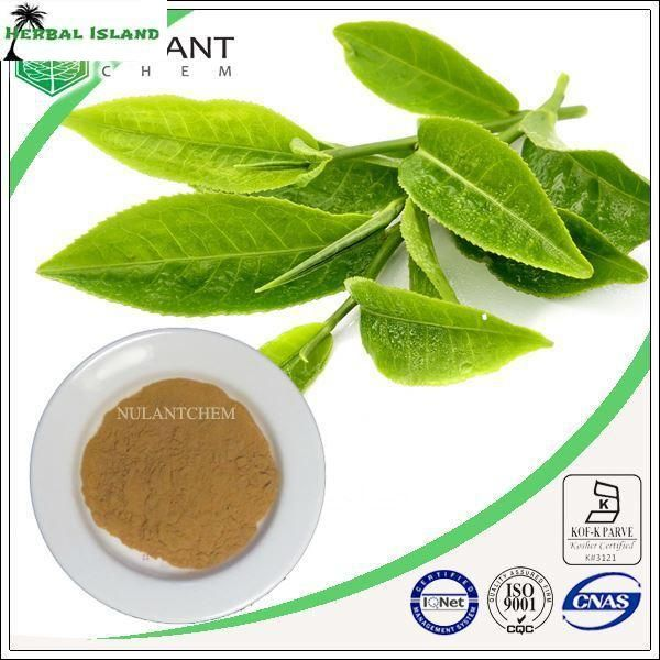 500g Green tea powder extract 45% polyphenols sample