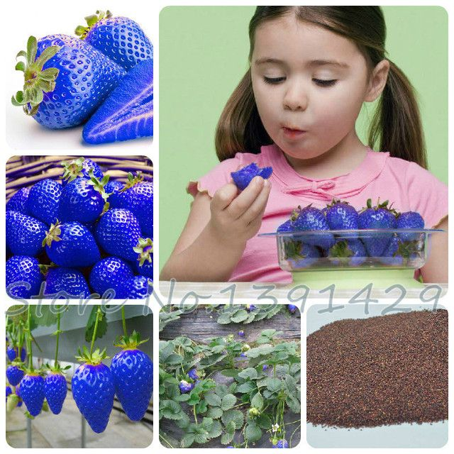 300Pcs Sweet Blue Strawberry Seeds fruit vegetable seeds edible Nutritious Plant Seeds sweet & juicy indoor balcony plante