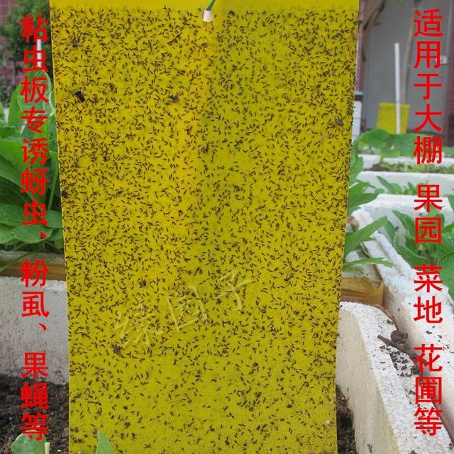 Strong and efficient flypaper sticky fly paper off armyworm board sticky fly paper sticky Mosquito wholesale plastic plates