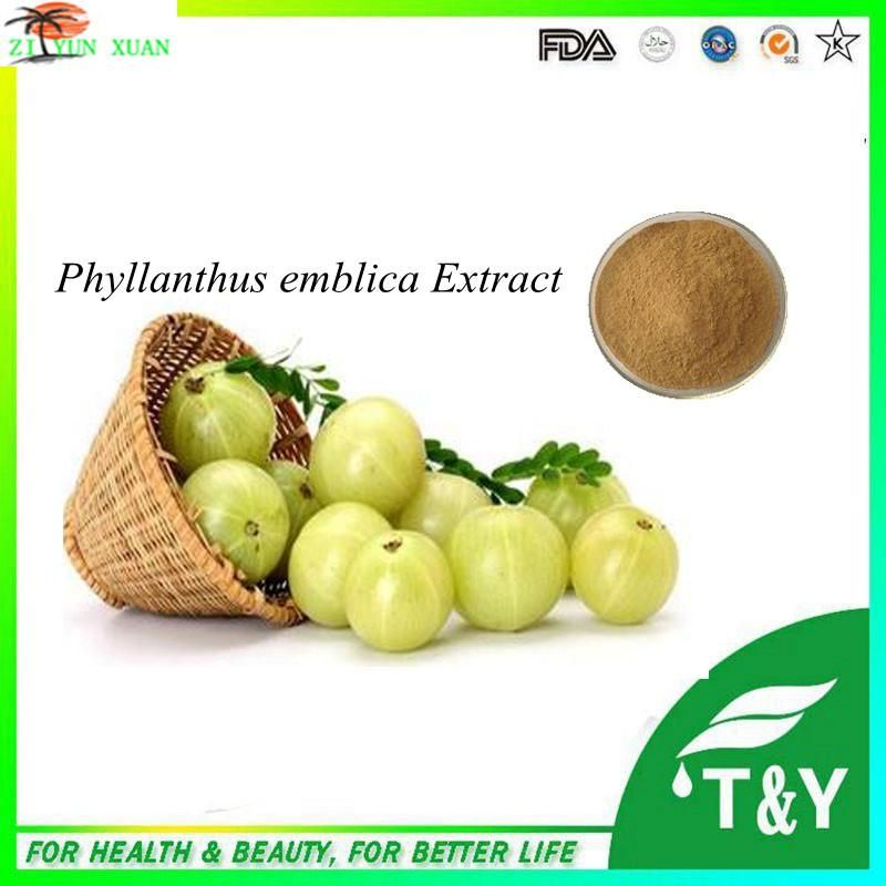 100% natural Phyllanthus Emblica Extract/Alma berry P.E./Indian Gooseberry powder 300g/lot