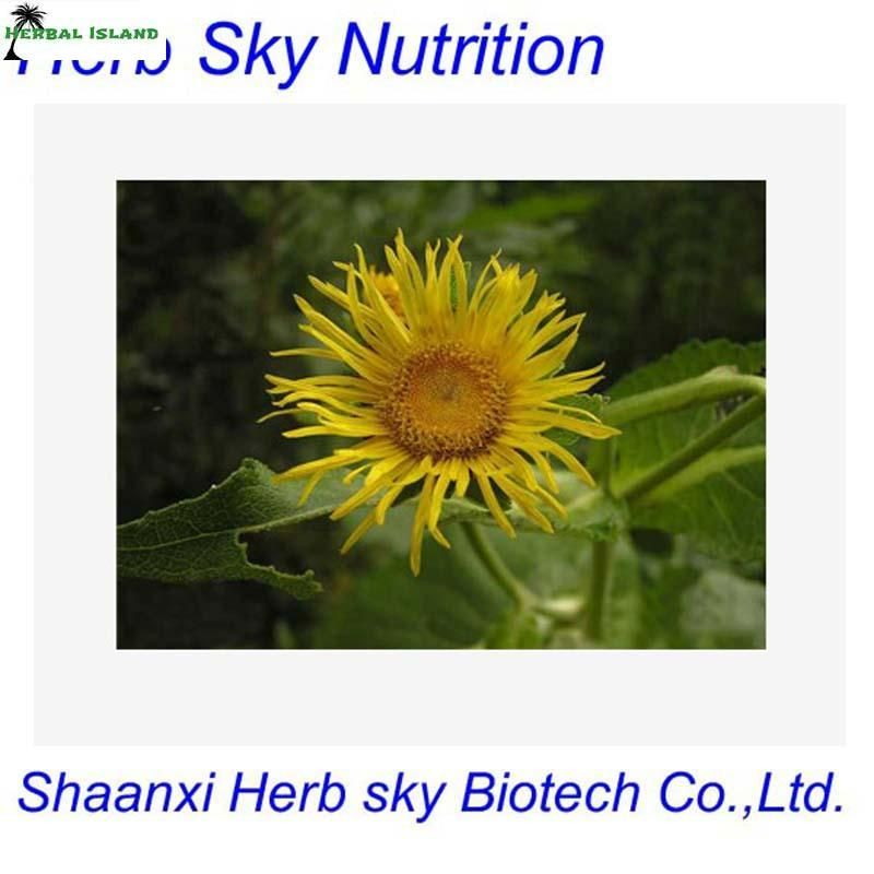 Healthy forelecampane root extract,ISO elecampane extract uses,natura elecampane tincture 500g/bag