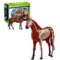 4D Vision cheval modèle jouet anatomie animale jouet éducatif modèle anatomique jouet biologique éducatif anatomie jouet pour enfants enfants