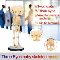 Tres ojos de doble cabeza bebé anatomía cráneo esqueleto anatómico del cerebro anatomía modelo de educación estudio anatómico de la pantalla