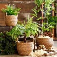 Cestos decoración jardinera maceta tejido de cesta de frutas con manijas boda de paja Seagrass planta cesta cestas