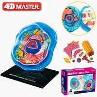 4D cellules animales Intelligence assemblage jouet modèle d'anatomie humanorgue enseignement médical bricolage appareils scientifiques populaires