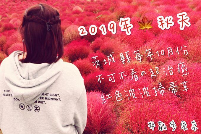 【散步東京】茨城縣國營日立海濱公園|秋天不可不看の超治癒「紅色波波掃帚草」