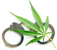 Federal Marijuana Sentences Plummet: Report