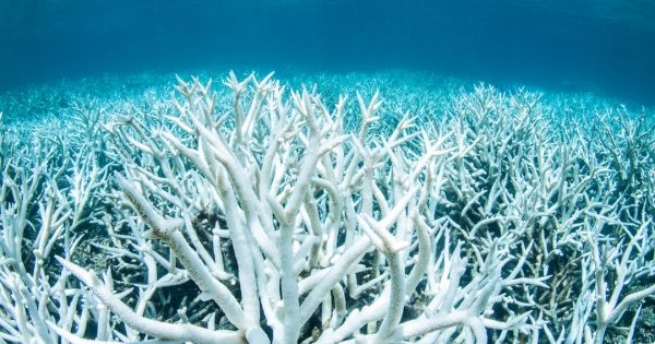 Mass Bleaching Is Hitting the Great Barrier Reef Again
