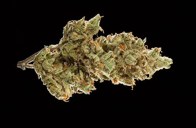2016 NorCal Medical Cannabis Cup: Top 5 Sativa Flowers