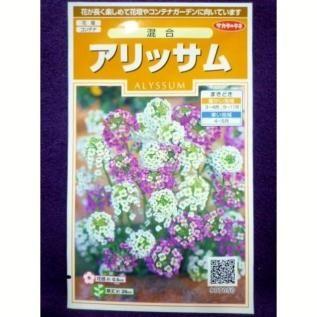 ★種子★処分★ アリッサム 混合 サカタのタネ 19.10 ◎花が長く楽しめて花壇やコン