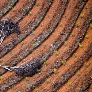 ЕУ лани согорила 4,5 милиони тони палмино масло како биодизел