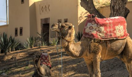 Marokko in Agadir - MA - MA