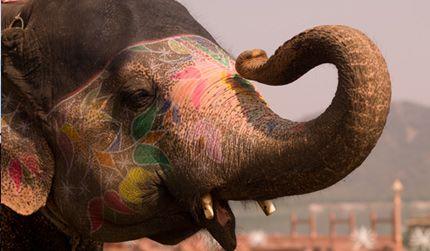 India in Jaipur - IN - IN
