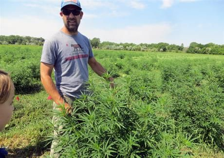3 years into nation's hemp experiment, crop's future is hazy