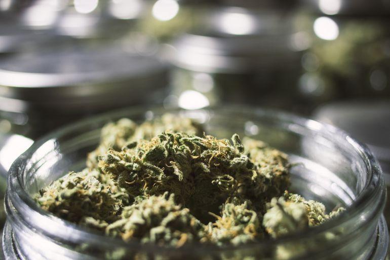 Guanyar presentará una moción para legalizar los clubes de cannabis