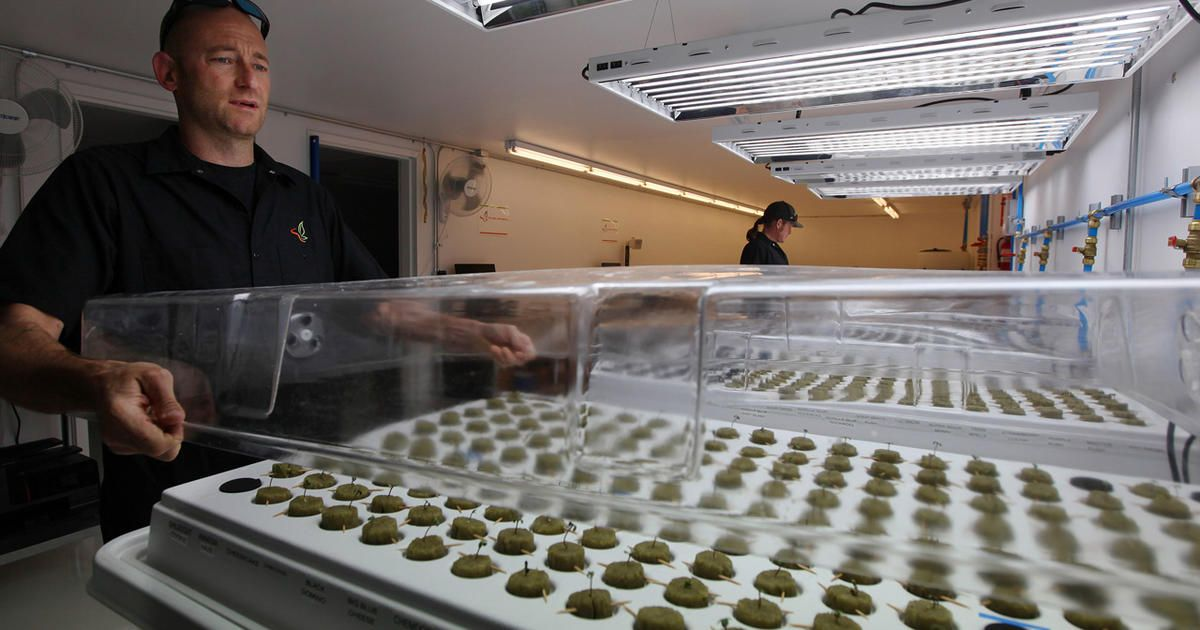 Where the jobs are: America's pot industry