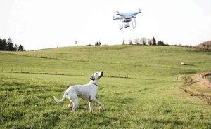 boris sgancia i droni per catturare i ladri di cani – nel 2020, 2,355 cani sono stati rapiti nel...
