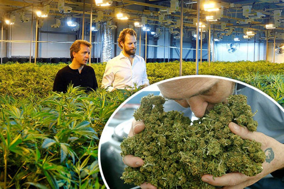 Inside huge CANNABIS factory in Europe (but not Amsterdam) - and it's completely LEGAL