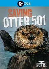 Nature: Saving Otter 501