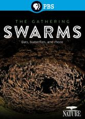 Nature: The Gathering Swarms