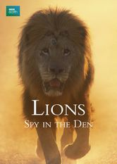 Lions: Spy in the Den
