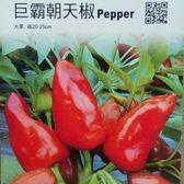 種子王國巨霸朝天椒【專業種子】巨霸朝天椒蔬果分包裝種子約20粒/包(分裝包)