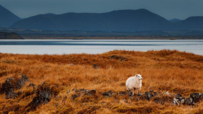 【冰島自由行】那些需要在冰島旅行期間需要避免的禁忌