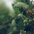 ДФЗ увеличава теренните проверки по схемите за обвързана подкрепа за плодове и зеленчуци