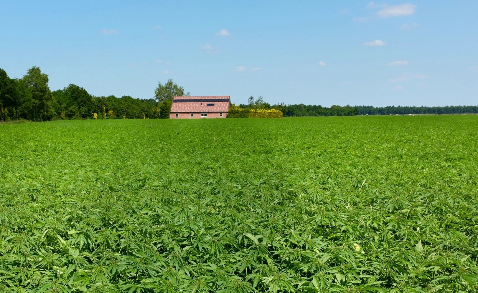 Farmers Rally Behind SC Industrial Hemp Bill | FITSNews