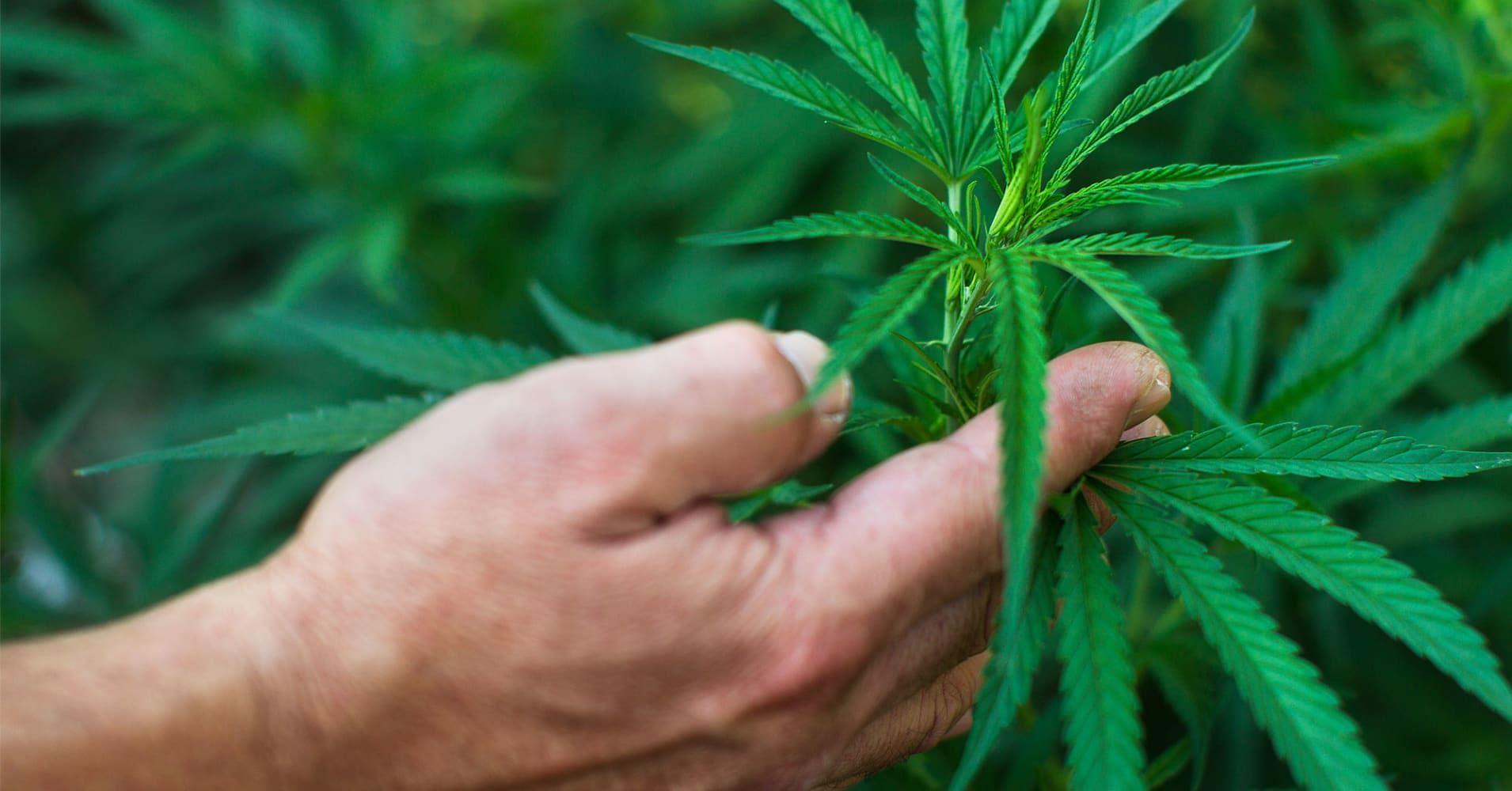 Marijuana market to reach $50 billion in decade: Cowen