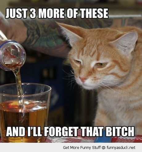 [Image: funny-sad-unhappy-cat-3-more-drinks-scot...h-pics.jpg]