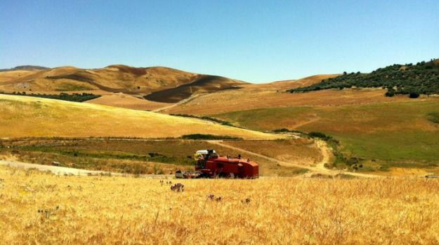 Agricoltura Regione mette bando primi mille ettari per giovani