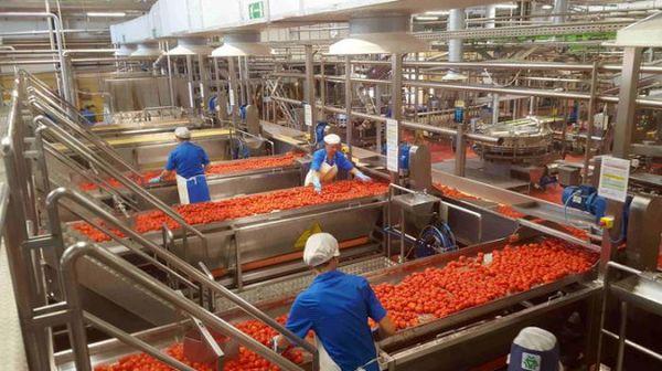Battistoni, affrontare crisi pomodoro con filiera organizzata