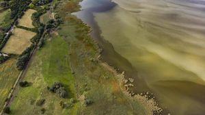 Antinfiammatori dalle alghe, dalla Ue 7,5 milioni per la ricerca