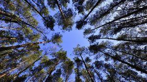 La capacità riproduttiva degli alberi cala con l'età