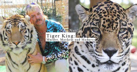 Netflix紀錄片《Tiger King》揭露繁殖業者和動物權益的勢不兩立,誰才是真正的贏家?