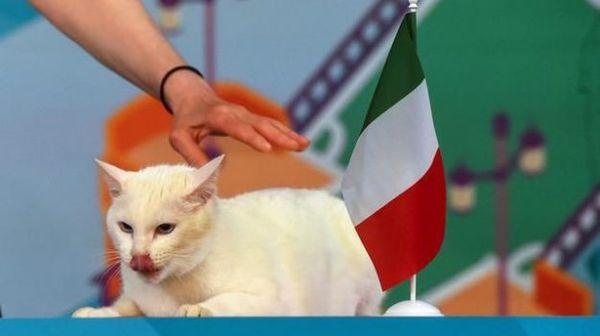 Euro 2020, Turchia-Italia: il gatto Achille scommette sugli Azzurri