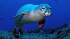 Grecia: la foca-mascotte
