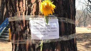 Catanzaro, dopo i roghi la pineta di Siano riparte da un fiore: il messaggio del giovane Alfredo VIDEO