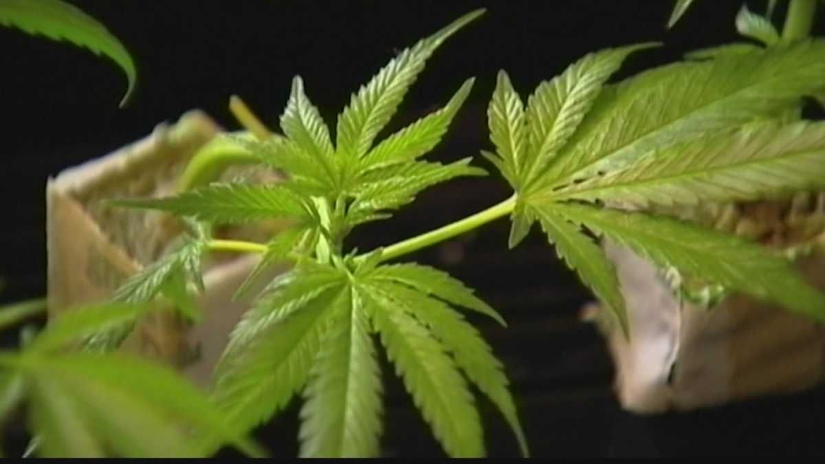 Wisconsin Senate passes marijuana extract bill