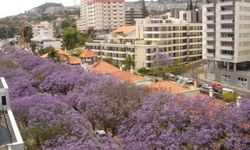 Funchal - Appartment 3 Bedrooms - Apartment Funchal Holiday