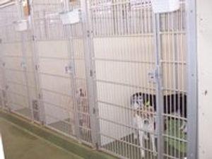 Image 4   VCA Woodland South Animal Hospital